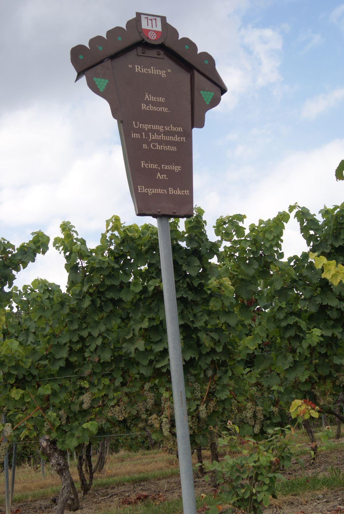 Weinlehrpfad