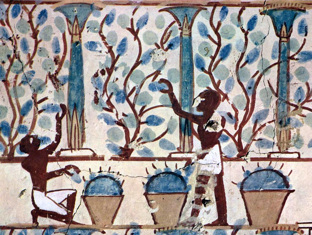 Wein und Weinbau im Alten Ägypten Darstellung aus einer Grabkammer