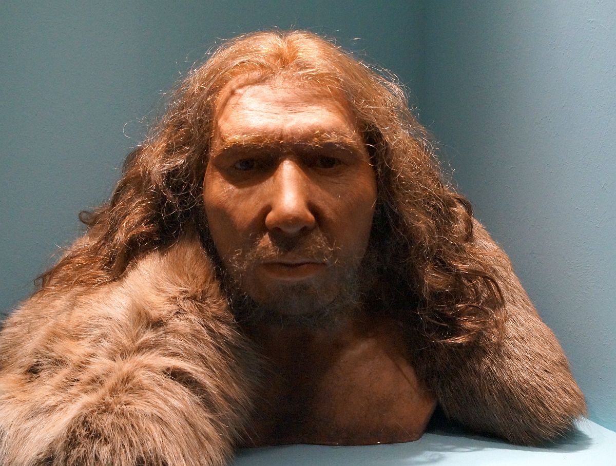 Neandertaler LVR Landesmuseum Bonn Rekonstruktion