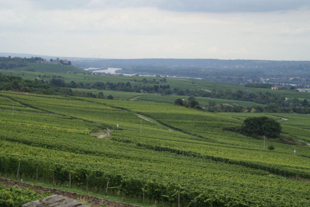 Rheingau Landschaft