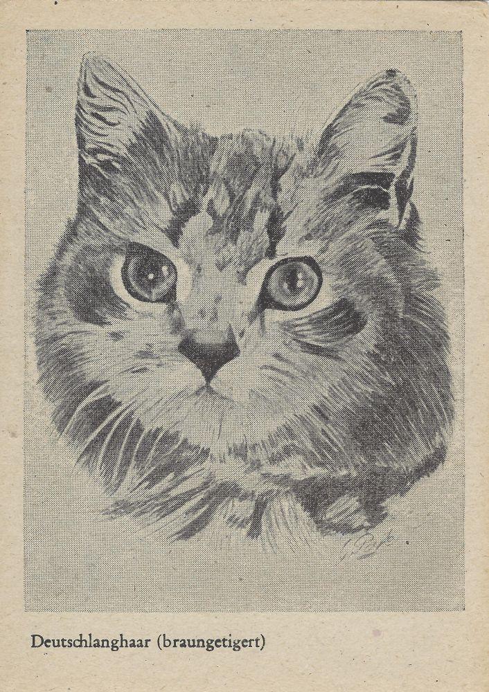 Deutschlanghaar Katze